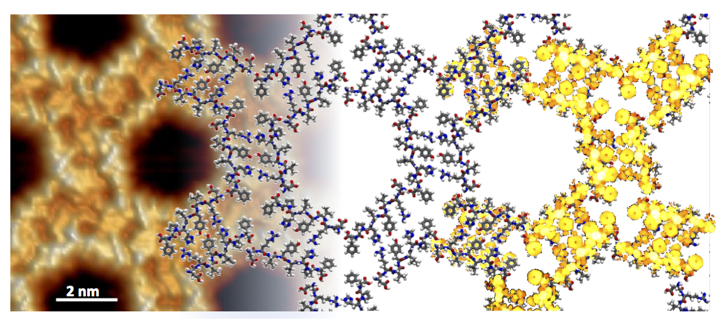 Two-Dimensional Honeycomb Network through Sequence-Controlled Self-Assembly of Oligopeptides