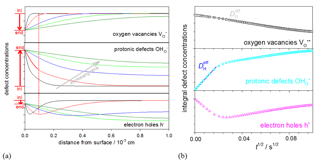 <strong>Fig. 2:</strong> (a) Simulated evolution of space-resolved defect concentration profiles after an increase in <em>p</em>H<sub>2</sub>O for a material with sufficient hole concentration to decouple the proton and oxygen vacancy concentration changes (defect diffusivity ratios <em>D</em><sub>h<sup>• </sup></sub>= 100<em>D</em><sub>OH<sub>O</sub><sup>• </sup></sub>= 10<sup>4</sup><em>D</em><sub>VO<sup>••</sup></sub>; colors indicate different times after the <em>p</em>H<sub>2</sub>O increase). (b) Integral defect concentrations plotted as a function of square root of time; this representation allows one to extract effective hydrogen and oxygen diffusivities <em>D</em><sub>H</sub><sup>eff</sup> > <em>D</em><sub>O</sub><sup>eff</sup> for the fast initial reduction and the slower reoxidation processes from the slopes.